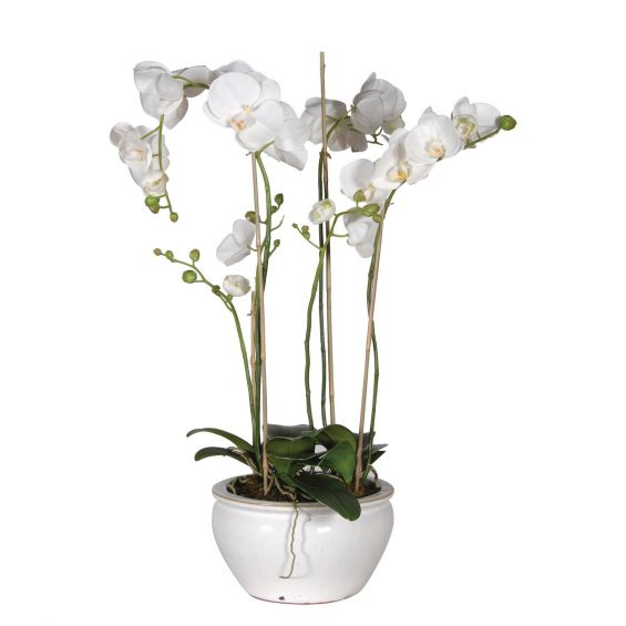 White Orchid in Pot - Small
