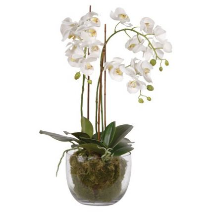 Orchid Moss Plants