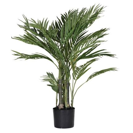 Small potted Areca palm